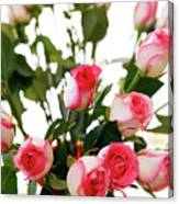 Pink Trimmed Roses Canvas Print