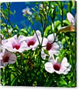 Pink Trumpet Flowers In Pilgrim Place In Claremont-california Canvas Print