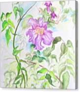 Pink Trumpet Vine Canvas Print