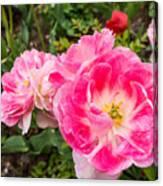 Pink Tulip, Keukenhof Canvas Print