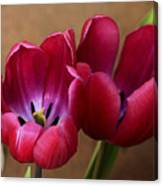 Pink Tulip Pair Canvas Print