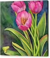 Pink Tulip Twist Canvas Print