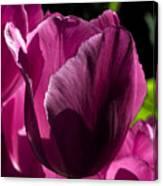 Pink Tulip Watercolor Canvas Print