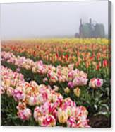 Pink Tulips And Tractor Canvas Print