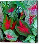 Pink Veined Canvas Print