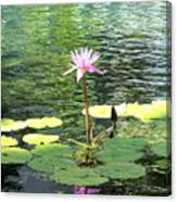 Pink Water Lily Pad Canvas Print