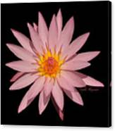 Pink Water Lily Transparent Canvas Print