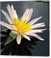 Pink Water Lily With Dragonfly Canvas Print