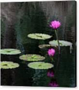 Pink Waterlillies Canvas Print
