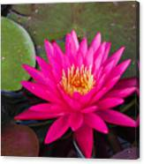 Pink Waterlily Garden Canvas Print