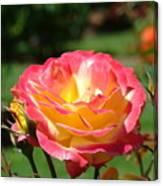 Pink Yellow Roses 3 Summer Rose Garden Giclee Art Prints Baslee Troutman Canvas Print