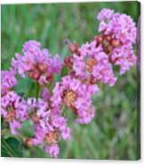 Pinkish Red Flower Bloom Close Up Canvas Print