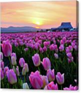 Pinks At Sunset Canvas Print