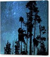 Pinnacle Of The Forest  Canvas Print