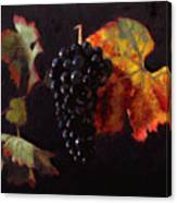 Pinot Noir Grape With Autumn Leaves Canvas Print