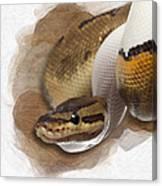 Pinstripe Pied Royal Python 01 Canvas Print