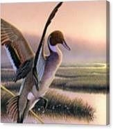 Pintail Duck-3rd Place Wi Canvas Print