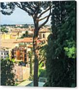 Pinus Pinea Canvas Print