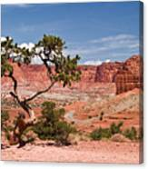 Pinyon Pine Tree Canvas Print
