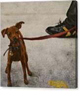 Pisa Puppy Canvas Print