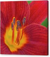Pistil, The Female Reproductive Part Of A Flower Canvas Print