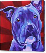 Pit Bull - Shakti Canvas Print