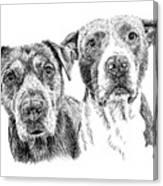 @pitbull.jack.and.miele Canvas Print