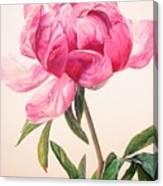 Pivoine 1 Canvas Print