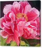 Pivoine Rose Canvas Print