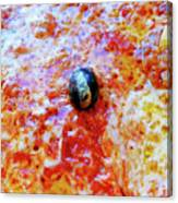 Pizza Pie With Olive Canvas Print