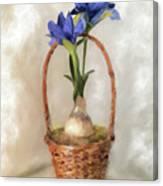 Plain Blue Iris Canvas Print