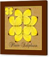 Plain Sulphur Butterfly Wheel Canvas Print