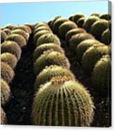 Planet Of Cactus Canvas Print