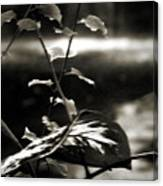 Plant 8657 Canvas Print