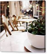 Plant In A Cup In A Cafe Canvas Print
