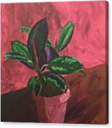 Plant In Ceramic Pot Canvas Print