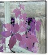 Plant In Negative Canvas Print