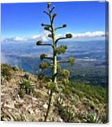 Plant On Volcano Slope Canvas Print