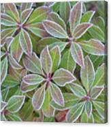Plant Pattern Canvas Print