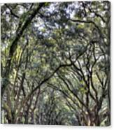 Plantation Drive Canvas Print