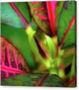 Plants In Hawaii Canvas Print