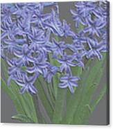 Plaster Hyacinth Canvas Print