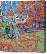 Platan Tree In Sunny Autumn Canvas Print