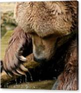 Play With Me Grizzly Canvas Print