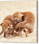 Playfighting Red Fox Kits Canvas Print