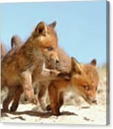 Playing Fox Kits Canvas Print