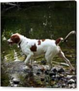Playing In The Creek Canvas Print