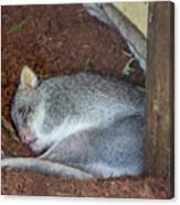 Playing Possum Canvas Print