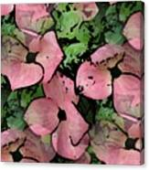Pleasantly Pink Canvas Print