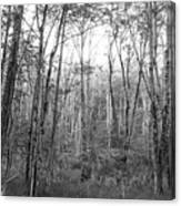 Pleasure Of Pathless Woods Bw Canvas Print